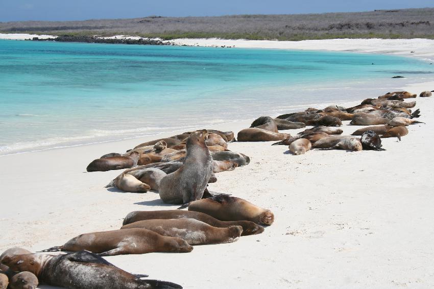 Praia Galápagos