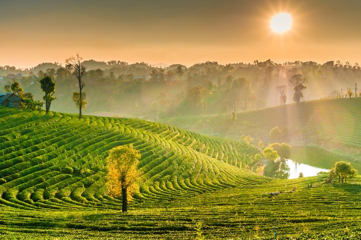 Chiang Rai - Tailândia