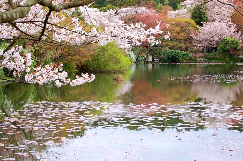 Jardim Japonês em Buenos Aires