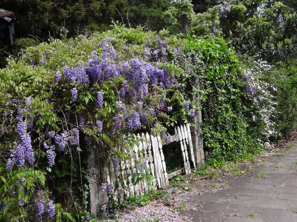 Primavera em Gramado: bairro Planalto - Mapa de Gramado. Foto: Bárbara Keller