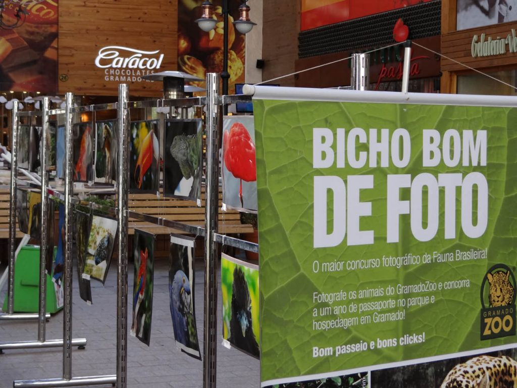 6º Concurso Fotográfico Bicho Bom de Foto - Mapa de Gramado. Foto: Bárbara Keller