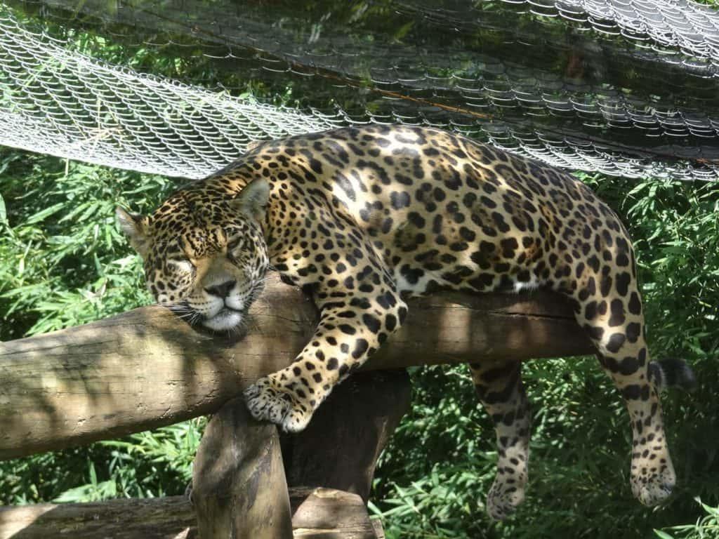 Gramado Zoo é ponto turístico de Gramado